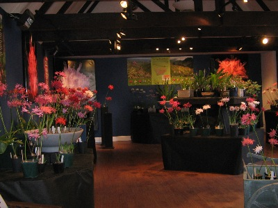 This year's stunning display in the Five Arrows gallery.